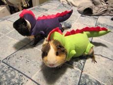 网友家养的宠物蜥蜴!