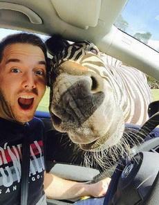 遇到一头特别热情友好的斑马
