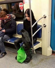 黑乌鸦和她邪恶的主人