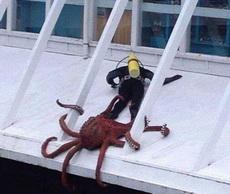 潜水员:我以后再也不要下水了