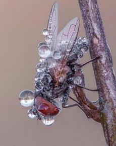 这只苍蝇怕是飞不了了
