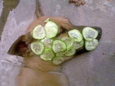 美顏黃瓜,被動物界廣泛使用,黃瓜這是要漲價啊