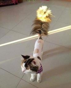 一只猫毛掸子