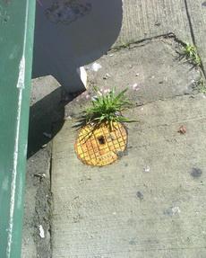 嗯,好菠萝