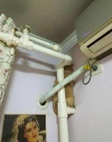 刚接回来的猫,有点儿怂