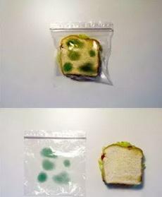 用了这个塑料袋后,再也不但心面包被别人吃了!一不小心就被妈扔掉了!