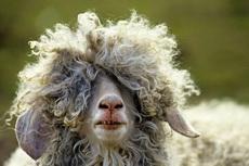 刚做的新发型,漂亮不