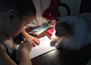 就這么靜靜的看著你寫作業