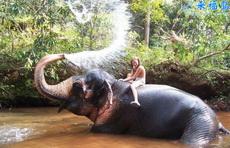 MM與大象淋浴
