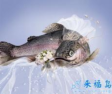 La boda de peces