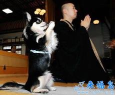 Perro y monje