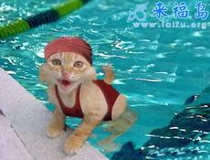 美女泳装照