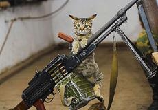 我是一只坚强的战猫