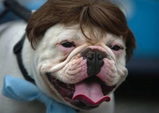 希特勒狗狗