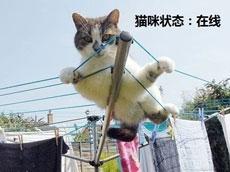 在线的猫咪