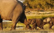 跟在大象后面的后果...