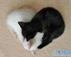 白貓與黑貓