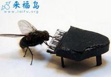 摄影师训练出苍蝇模特3