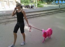 现在都市时尚女性流行养宠物羊