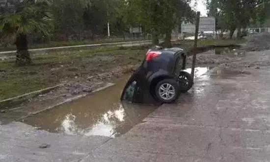 这是一只在河边饮水的野生轿车