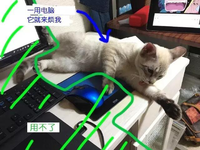 推上一位主人常被猫咪妨碍工作,于是在电脑前设置了致命驱猫倒刺,效果极佳