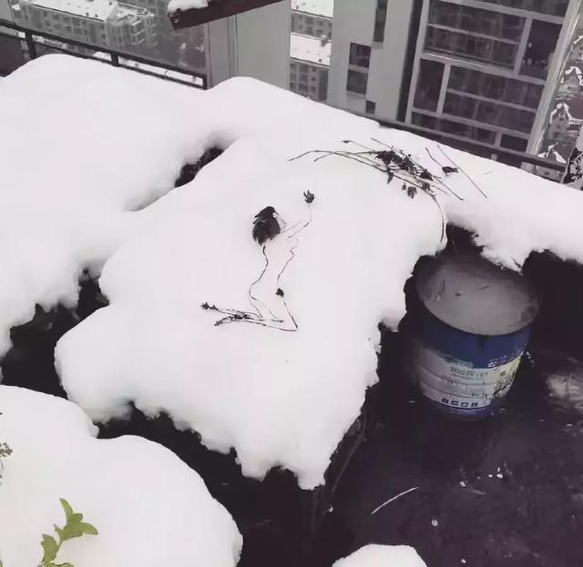 冰天雪地的谁家姑娘,为什么不给穿衣服啊!