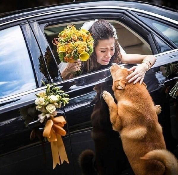 答应我,别再做舔狗好吗?