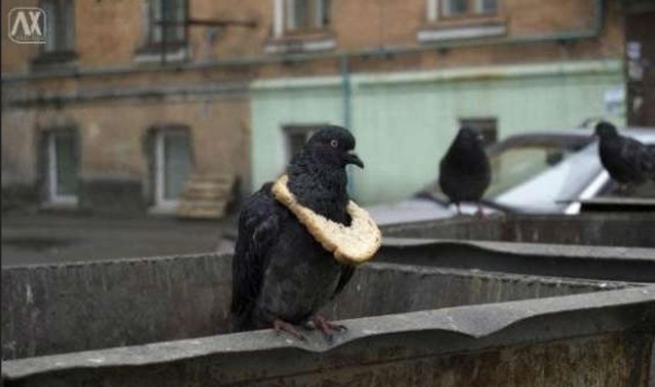 别低头,面包会掉