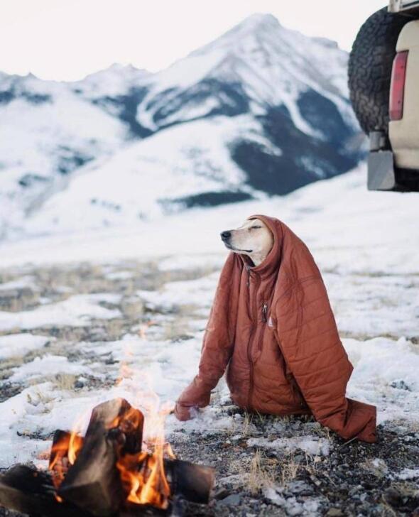 苍凉的郊野,冻死狗了