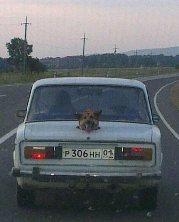 单身狗只配坐后备箱