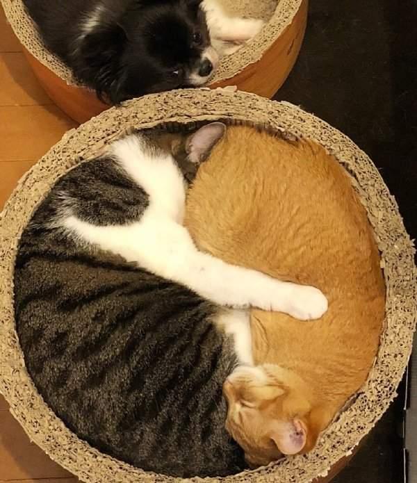 太极生两猫