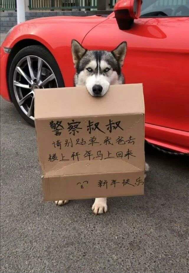 ��L��在狗的面子上一定要�|�[动物囄���]
