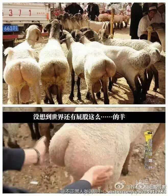这种羊肉好吃不