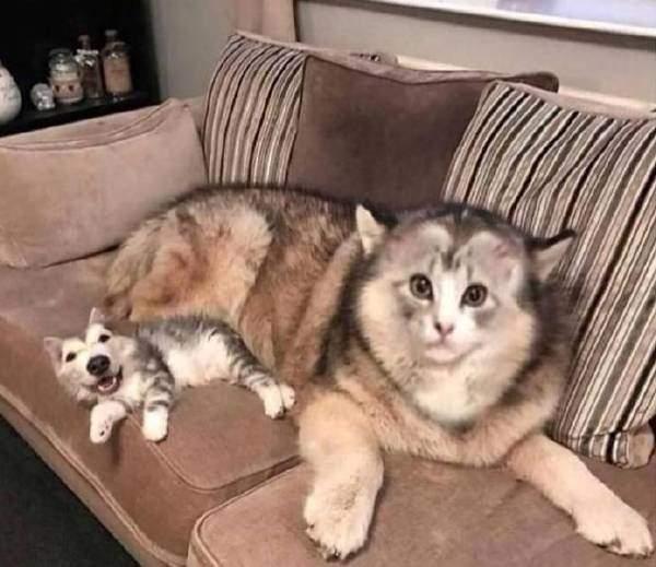 猫猫还挺威猛的