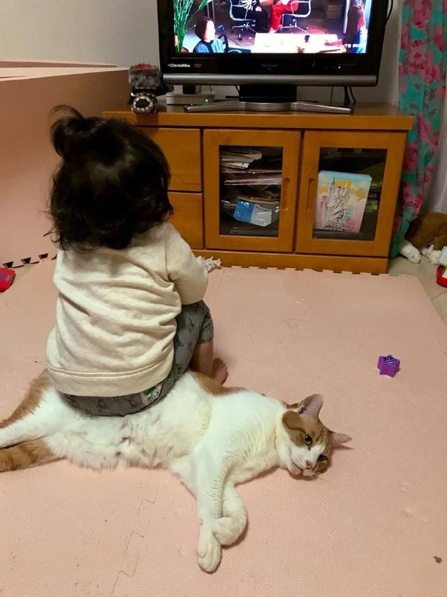 貓咪:我太難了