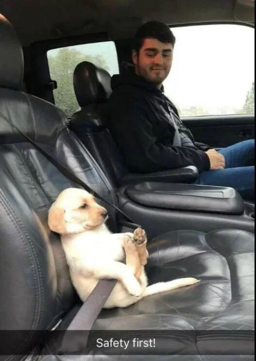 狗子上路注意安全