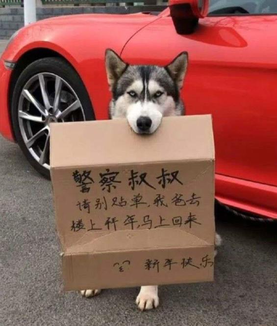车主一回,罚单照有,狗还没了