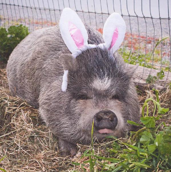 天杀的王八小兔兔