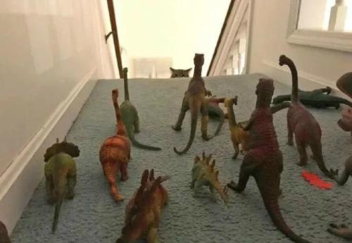 如何阻止猫咪上楼
