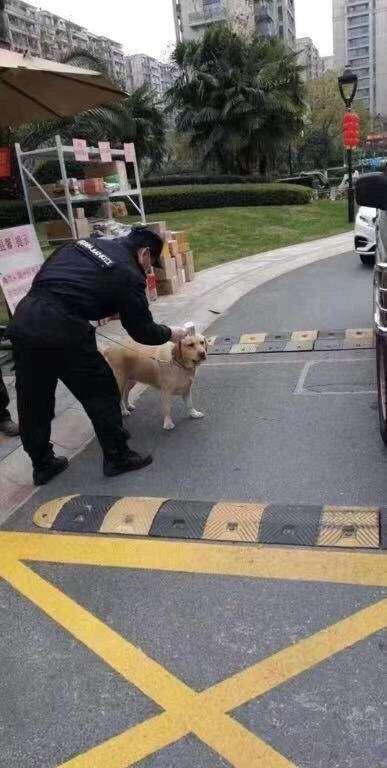 狗子都不用戴口罩的嗎