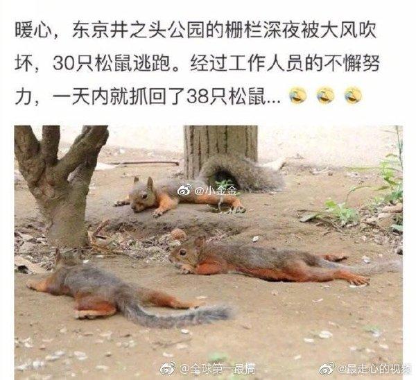 8名松鼠突然获得编制