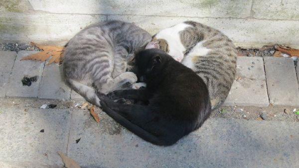 貓貓有愛心很不錯